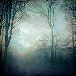 Moody forest scenery on a hazy day<br />