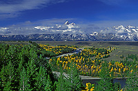 749450180 aspens populus tremuloides in fall color and lodgepole pines pinus contorta var. latifolia frame the snake river below the teton range shrouded by clouds from a clearing storm grand tetons national park wyoming