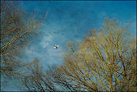 Aeroplane and trees in Richmond Park
