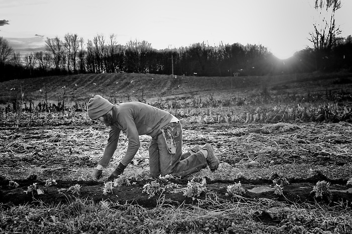 A farmer weeding and removing stones from the earth