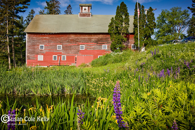 An old red barn surrounded by wildflowers in Sugar Hill, NH, USA