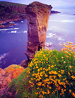 Seastack along the Orkney shore, Orkney Islands, Scotland, United Kingdom, Yesanby Cliffs and sea stacks