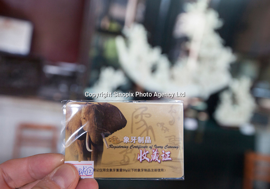 An ivory licence is seen at Chen Clan Academy, an officially licenced retail outlet, as authorised by China's State Forestry Administration, Li Wan District, Guangzhou, Guangdong Province, China, 28 November 2013. <br /> <br /> Photo by Alex Hofford / Sinopix