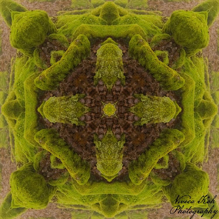 Kaleidoscopic photograph