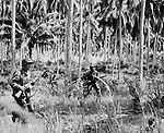 A Marine Raider patrol, almost invisible by reason of theier campflage suits, moves cautiously through a cocnut plantation on one of the islands of the Russells group within the Solomons Islands.