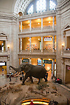 Smithsonian Museum of Natural History, Stuffed African elephant in lobby, Washington, DC, dc124471