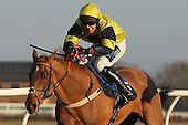 Echo India ridden by Mr W Kinsey in action during the PointToPoint.co.uk Hunters Chase - Horse Racing at Huntingdon Racecourse, Cambridgeshire - 23/02/12- MANDATORY CREDIT: Gavin Ellis/TGSPHOTO - Self billing applies where appropriate - 0845 094 6026 - contact@tgsphoto.co.uk - NO UNPAID USE.
