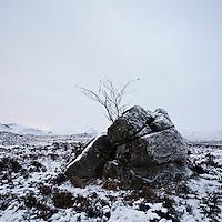 Stone and tree in winter, Rannoch Moor, Highlands, Scotland