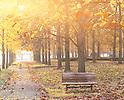 Japan's Fall Season