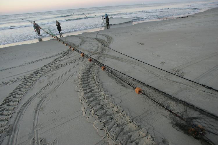Chuck Beckley       Tractor tracks and stretched nets announce the beginning of another mullet blow.