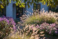 Chicago Meadow Garden