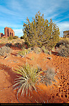 Southwest Desert Landscape, Monument Valley Navajo Tribal Park, Navajo Nation Reservation, Utah/Arizona Border