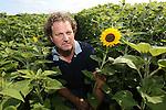 Foto: VidiPhoto<br /> <br /> NOORDWIJK - Werkzaamheden op de kwekerij van Job Pennings uit Noordwijk. Hoofdteelt van Pennings is zonnebloemen en gladiolen.