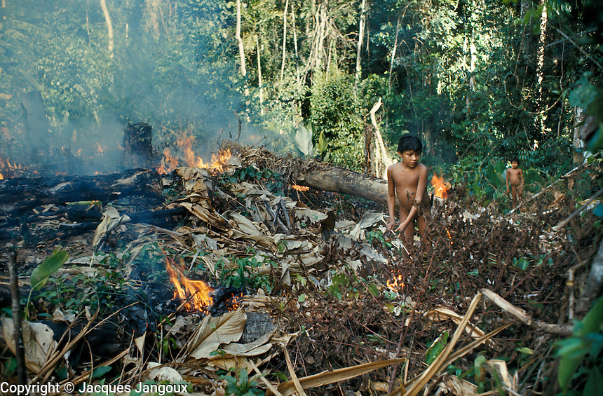 Slash And Burn Agriculture Native Americans Slash-and-burn Agriculture by