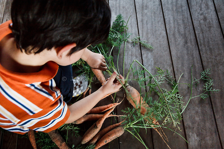 Hino, Shiga prefecture, October 6 2013 - Skyler Moore playing with a caterpillar. He found it in carots freshly gathered in the vegetable garden of the 150-year-old traditional house renovated by Mr Austin Moore and his wife.