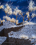 Aztec Ruins, North Walls with Cottonwoods (Infrared) ©2016 James D Peterson.  These gaunt trees guard the remnants of the great Anasazi society that once thrived within these walls.