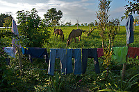 Rural laundry drying in horse pasture - Pacific Coast - Colombia
