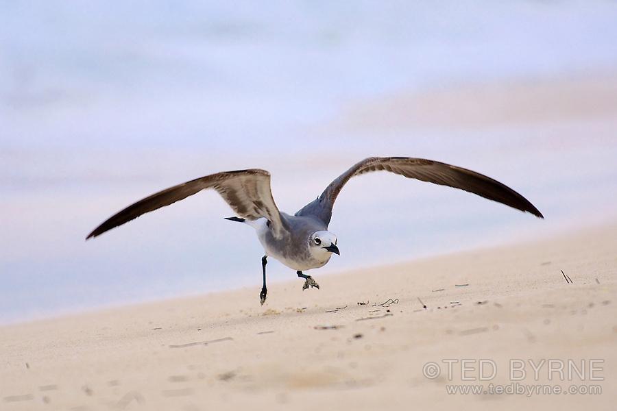 Seagull running on the beach