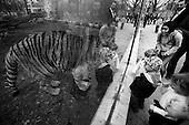 Wroclaw, Poland, April 5, 2009:<br /> Young visitors looking through reinforced glass at the Siberian tiger, at the.Wroclaw Zoo.(Photo by Piotr Malecki / Napo Images)..Odwiedzajacy Zoo przygladaja sie przez pancerna szybe groznemu tygrysowi syberyjskiemu..Wroclaw, Kwiecien 2009.Fot: Piotr Malecki / Napo Images