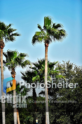 5 March 2010: Palm trees adorn the grounds at Champion Stadium in the ESPN Wide World of Sports Complex in Orlando, Florida. Mandatory Credit: Ed Wolfstein Photo