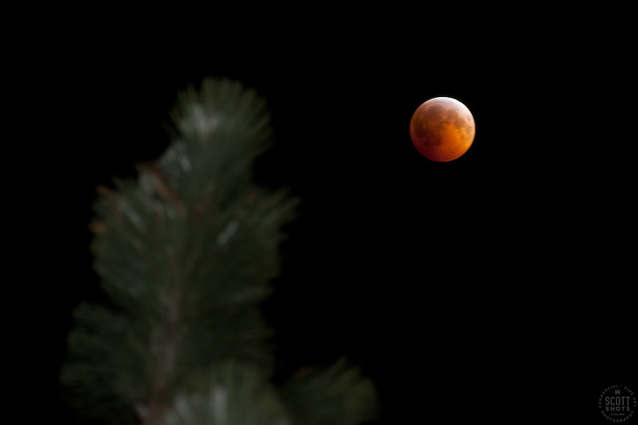 """Total Lunar Eclipse on Winter Solstice 1"" This very special total lunar eclipse was photographed on 12-20-2010 in the Tahoe Donner area of Truckee, CA."