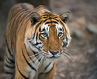 Asia and Oceania Nature & Wildlife