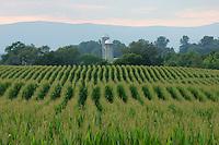 Farmland in Orange County, Virginia. Photo/Andrew Shurtleff