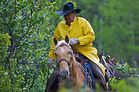 Swan Valley Rancher Mark Lundquist returning from moving his cattle out of a creek bottom during an extended wet spell.