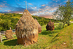 Traditional hay ricks in a wooded field near Sighlet, Maramures, Transylvania