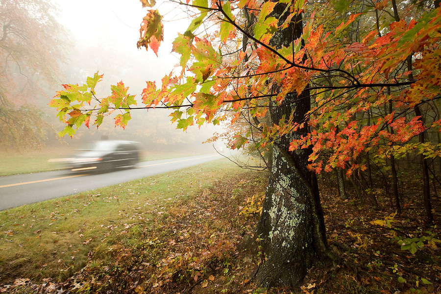 Leaves change colors on the Blue Ridge Parkway in Nelson County, Virginia. Photo/Andrew Shurtleff
