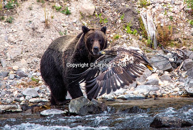 Wildlife & Other Animals