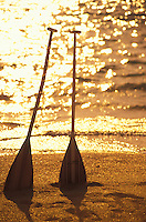 Two outrigger canoe paddles standing erect in the golden light of morning