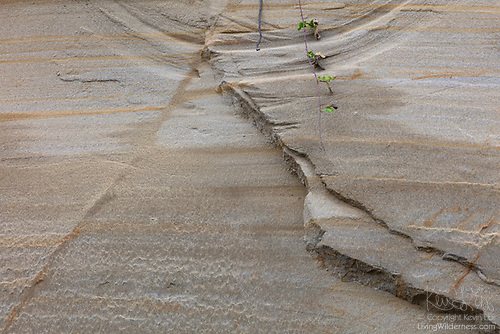 Erosion in Progress, Rucker Hill, Everett, Washington