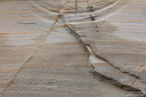 Erosion in Progress, Rucker Hill, Everett, Washington