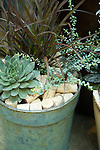 A great use for a few extra corks you might happen to have lying around is mulching this patina'd metal pot planted with Hens-and-chicks 'Lavender and Old Lace' (left), silver thyme (Thymus 'Silver Posie', right), and Phormium 'Jack Spratt' (rear).