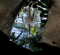 Tropical Rainforest Glasshouse (formerly Le Jardin d'Hiver or Winter Gardens), 1936, René Berger, Jardin des Plantes, Museum National d'Histoire Naturelle, Paris, France. Detail of cave in the Art Deco style building showing a reflection of a Howea Forsteriana palm tree in the rockpool.