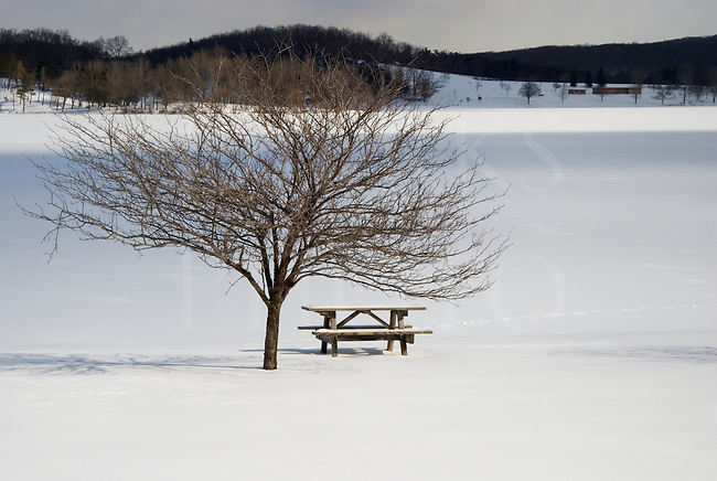 Snow covered picnic table with single bare tree on the shore of a frozen lake.