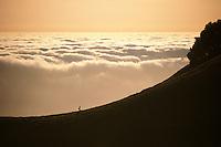 California, Marin County, Mount Tamalpais State Park, Hiker on ridge
