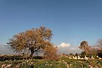 Muslim cemetery in Tuba-Zangria