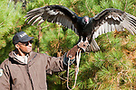 This turkey vulture at the Pocomoke River State Park in Maryland is under the care of the National Park Service. The vulture suffers from neurological injuries after ingesting pesticide at a local farm.