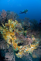 Scuba Diver at West Wall<br />
