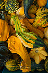Decorative Gourds on display at the Portland, Oregon Farmers' Market at Portland State University, the North Park Blocks