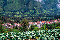 Java, East Java, Bromo Tengger. In the hillside along the road up to Bromo there is a few villages. Cabbage can be grown in the relative cold climate.