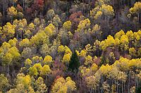 Unita National Forest, Utah Stock Photos