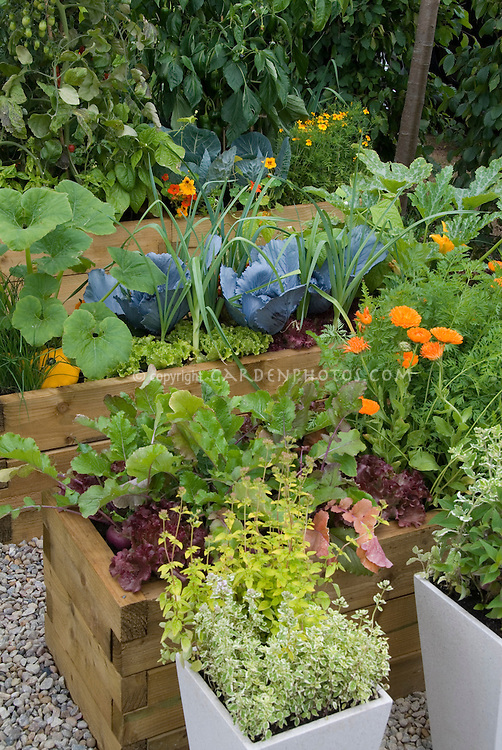 Vegetable and flower garden in raised beds, with cabbage, squash, lettuces, calendula, tomatoes, nasturtiums, and more