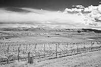 Infrared photograph of a vineyard in the Red Mountain AVA.  Fine art photography by Michael Kloth.