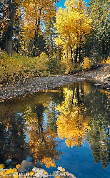 Blackwood Creek II