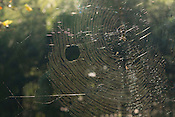A spiders web glistening in late afternoon sunlight.