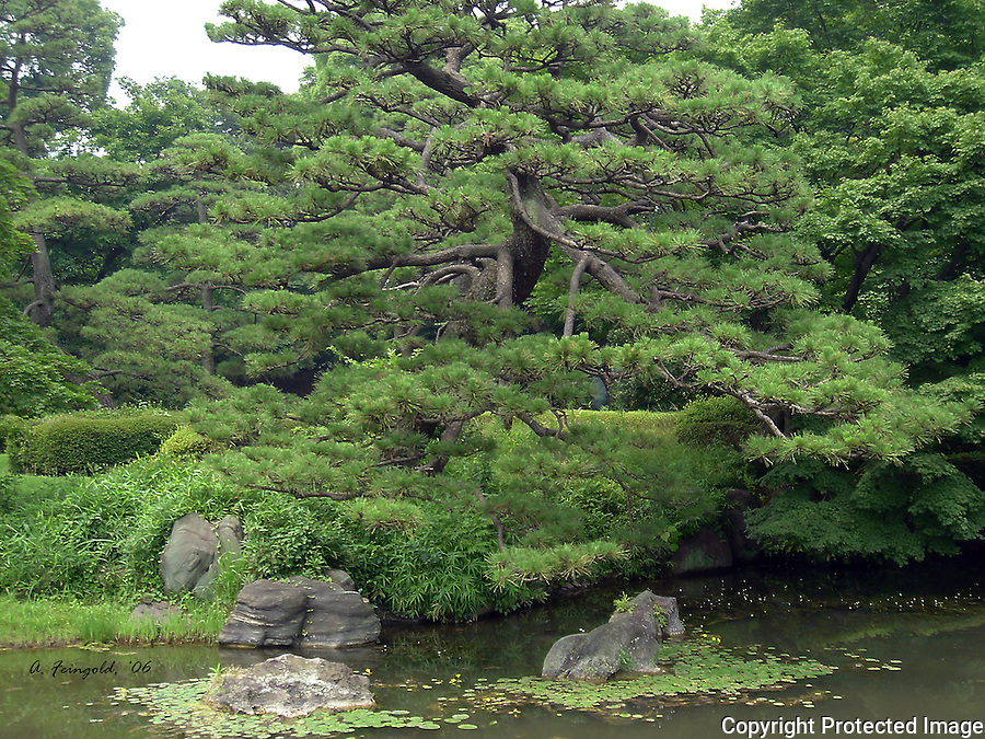 Tokyo Gardens, Historic Japanese Gardens, Four Seasons Hotel Tokyo, Historic Chinzan-so Garden<br /> <br /> CLICK ON ADD TO CART ABOVE TO SEE AVAILABLE STYLES, SIZES AND PRICES