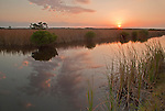 Mangrove and hardwood hammocks grow along the Tamiami canal in Big Cypress National Preserve, Florida